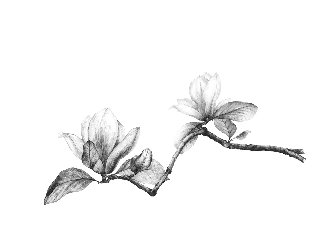 Clipart Gavel 22453930 furthermore 289359512 besides IS 4 furthermore Magnolia also 8842. on drawing